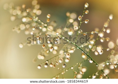 Macro photography of green grass with dew drops in the sunshine. Fresh morning dew on spring grass, abstract nature background. Royalty-Free Stock Photo #1858344619