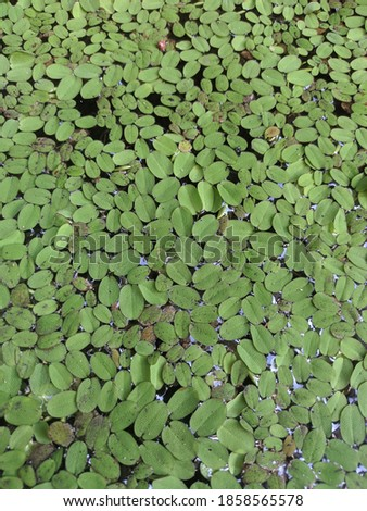 Botanically, mosses are non-vascular plants in the land plant division Bryophyta. They are small (a few centimeters tall) herbaceous (non-woody) plants that absorb water and nutrients mainly through t Royalty-Free Stock Photo #1858565578