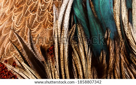 blue feathers mixed in with black feathers Royalty-Free Stock Photo #1858807342
