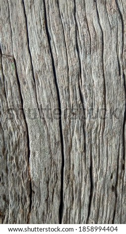 Silver Woods texture. This are texture old woods #1858994404