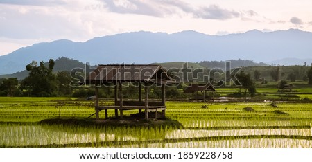 Big rice fields in a valley somewhere in inner Laos / Indochina. Flat landscape with mountains in the background. Afternoon yellow light. Royalty-Free Stock Photo #1859228758