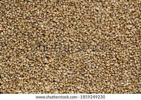 Whole hemp seeds. Surface and background with raw fruits of Cannabis sativa, high in complete protein and a great source of iron. Macro food photo, top view, from above. Backdrop.