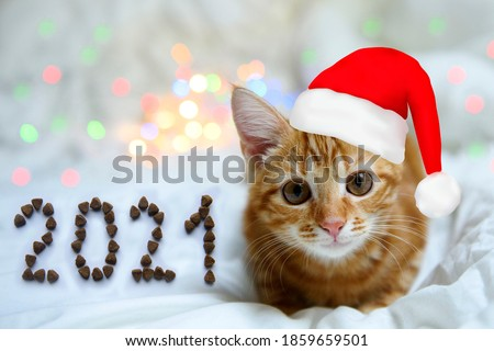 funny cute smile red kitten in the christmas hat on the festive background with bokeh. Number 2021 from the dry cat food.