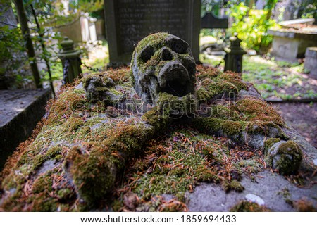 Skull on ancient grave surrounded with green moss.  A horror halloween picture, real grave.  abandoned scary picture, place where people die, cemetary picture, burried man, bones and human skull.
