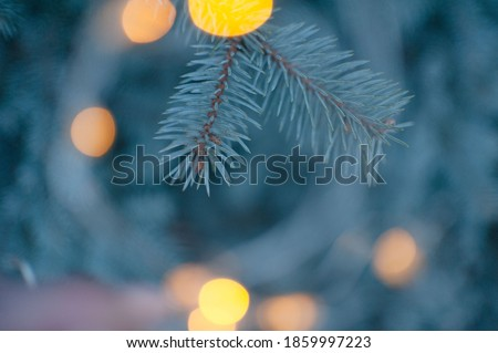 Spruce branches, Christmas tree, spruce branches close-up Royalty-Free Stock Photo #1859997223