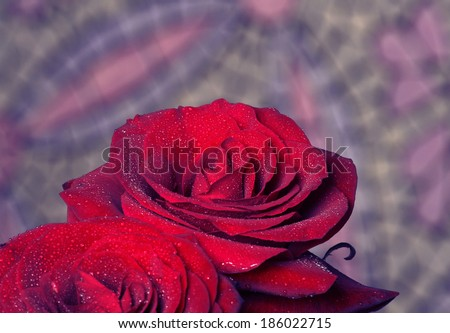 Beautiful flowers. Fresh red roses with drops of dew. #186022715