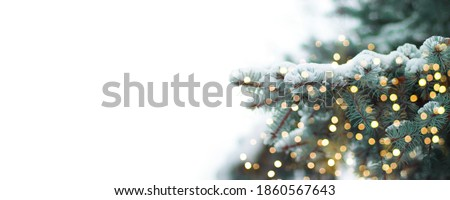 Christmas border, New year background. Beautiful green fir tree branches with gold lights decor on white banner. Winter noel concept. Royalty-Free Stock Photo #1860567643