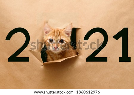 Cat in hole of paper, little red tabby kitty getting out through the craft background, funny pet. Number 2021.  #1860612976