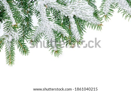 Nature Winter background with snowy fir tree branches closeup. Fir branches covered with snow on white background, top view. Winter Christmas border With Copy Space