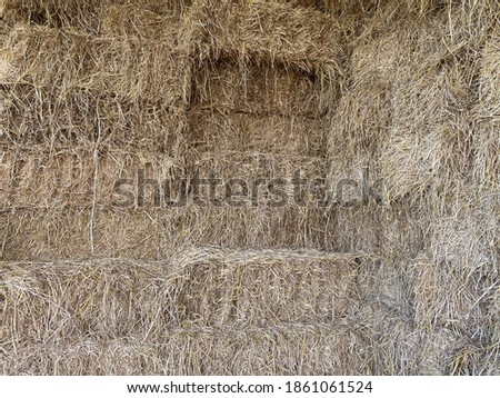 Hay background as a front view of a bale of hay as an agriculture farm and farming symbol of harvest time with dried grass straw as a tied haystack.