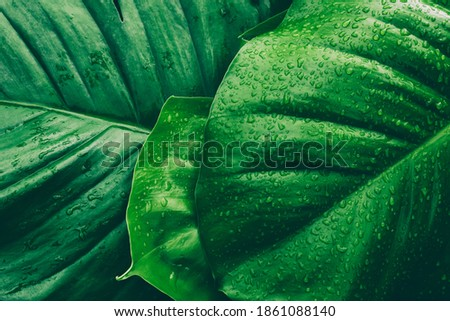 water drops splashing on green leaf, purity nature background Royalty-Free Stock Photo #1861088140