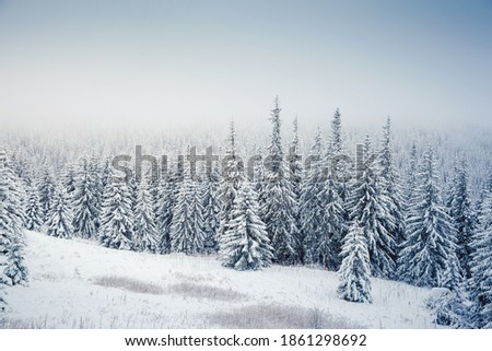 Spectacular winter landscape with snowy spruces on a frosty day. Location place Carpathian mountains, Ukraine, Europe. Christmas holiday concept. Happy New Year! Discover the beauty of earth.
