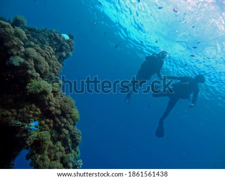 Couple diving above corals with fish in Eilat, Israel. Picture of a man and woman from underneath. Sunlight and blue sky paints their silhouettes.