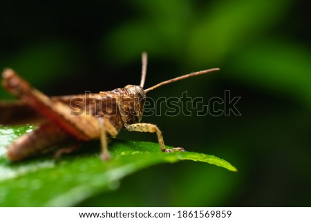 Grasshopper best and bright picture