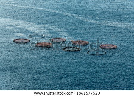 Aerial top view of the rings of fish aqua farm in the sea of madeira Portugal Europe Royalty-Free Stock Photo #1861677520