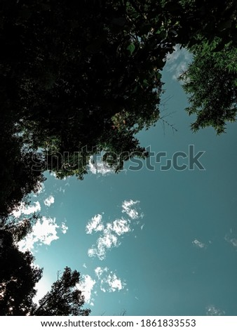 picture of bamboo tree leaves and open sky in early morning.