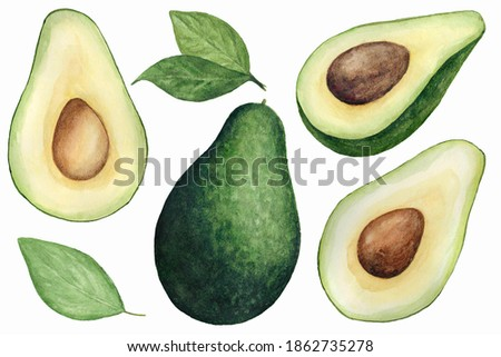 Watercolor Avocado Clipart Set, Hand painted Clip Art
