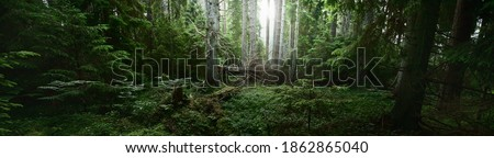 Pathway through the dark evergreen forest. Mighty pine, spruce, fir trees. Moss, fern, plants, tree logs. Atmospheric landscape. Pure nature, climate, seasons, rainforest. Panoramic view Royalty-Free Stock Photo #1862865040