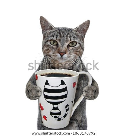 A gray cat wants to drink a cup of coffee. White background. Isolated.