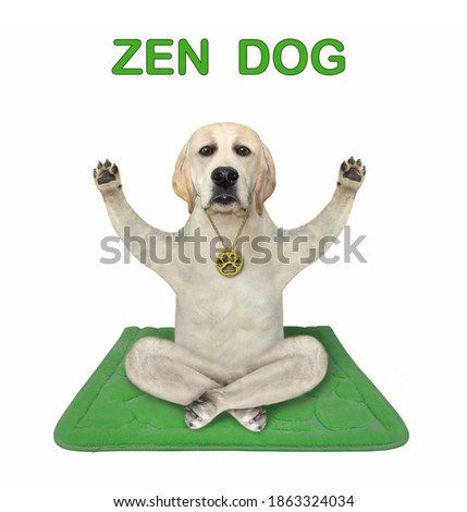 A dog is doing yoga exercises on a green fitness mat. Zen dog. White background. Isolated.