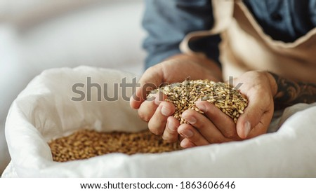Ingredients for beer at factory, favorite job and startup. Millennial owner worker in apron holds wheat or barley in hands and inhales aroma of grains, in warehouse, cropped, panorama, close up