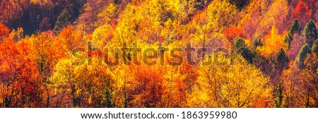 Colorful autumn landscape with trees and multicolored orange, red and yellow leaves. Extra wide panorama of a gorgeous forest in autumn. Beautiful panoramic background of fall season, color in nature.
