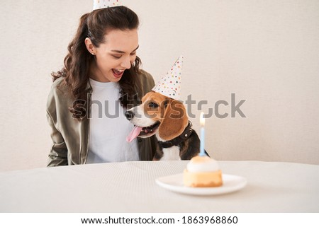My lovely birthday boy! Happy gorgeous open-mouthed woman looking at her birthday beagle dog with expression emotions. Stock photo
