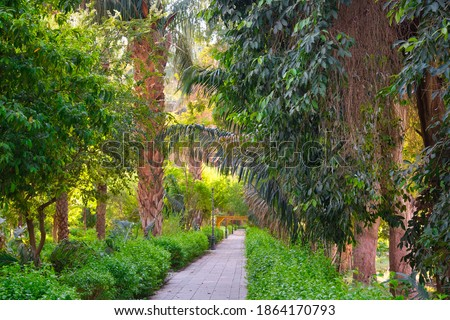 Botanical garden at the Kitchener's Island in Nile river, Aswan, Egypt Royalty-Free Stock Photo #1864170793