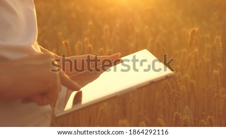 agronomist girl works with tablet on wheat field in sun. close-up. business woman plans her income in field. grain harvest.silhouette of a female farmer with tablet studying wheat crop in field.