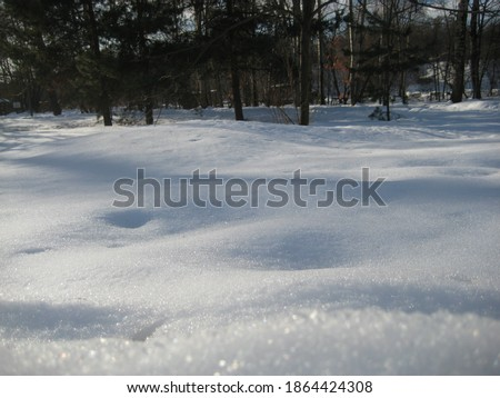 macro photo with a decorative background of a frosty winter day in the forest with trees and white snow with sparkling ice in the sun for design as a source for prints, posters, decor, interiors