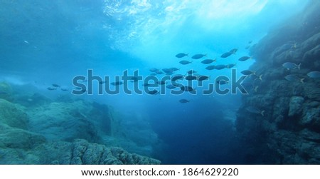 Beautiful image of big fish school swimming under the sun beam in the Mediterranean Sea, at the Ikaria island Royalty-Free Stock Photo #1864629220