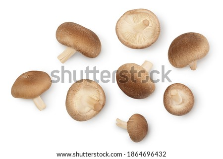 Fresh Shiitake mushroom isolated on white background with clipping path. Top view. Flat lay Royalty-Free Stock Photo #1864696432