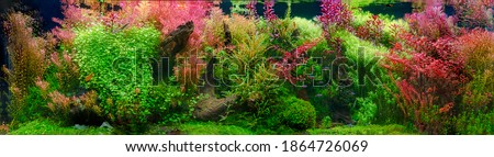 Aquarium with tropical fish jungle landscape with nature forest design tank with variety plants fish drift wood rock stone, underwater landscape with a variety of aquatic plants inside.  Royalty-Free Stock Photo #1864726069