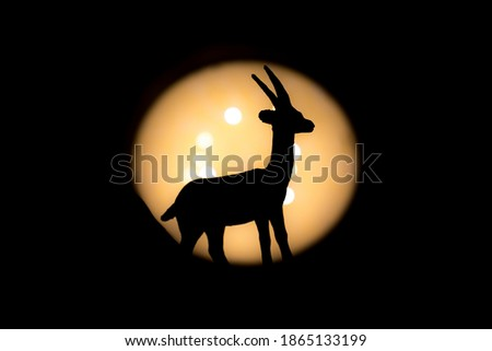 full gazelle at mid photographed with bright light in background and with short shutter speed with clear shadow