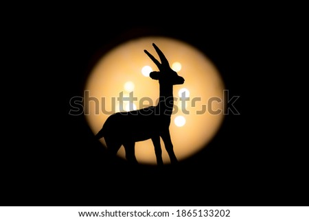 full gazelle little offset and tilted photographed with bright light in background and with short shutter speed with clear shadow