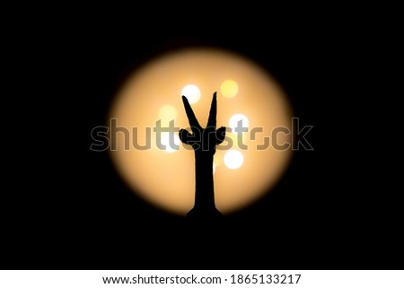 full gazelle head symmetry photographed with bright light in background and with short shutter speed with clear shadow