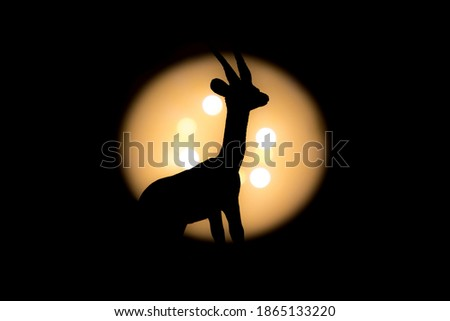 full gazelle zoomed photographed with bright light in background and with short shutter speed with clear shadow