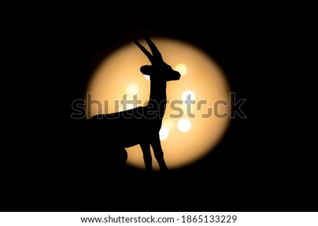 full gazelle side view photographed with bright light in background and with short shutter speed with clear shadow