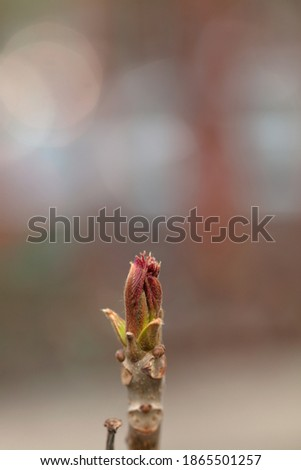 Toon shoot is growing in spring Royalty-Free Stock Photo #1865501257