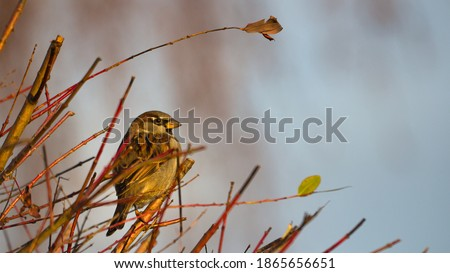 picture of a sparrow in a tree