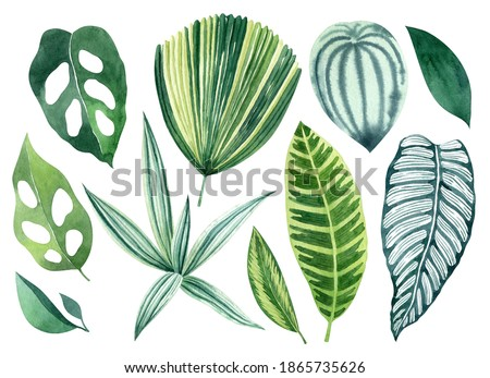 Tropical leaves watercolor hand drawn set with monstera, calathea, tradescantia, licuala grandis greenery. Clipart for wedding invitations, save the date cards, birthday cards, stickes.