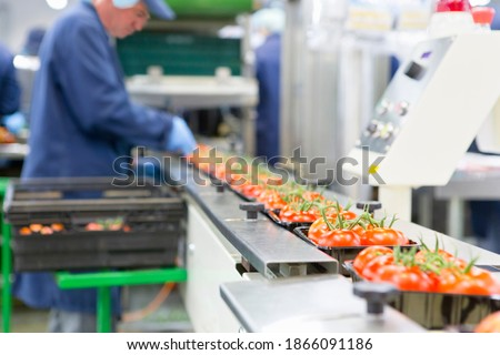 Worker packing ripe red vine tomatoes on production line in a food processing plant Royalty-Free Stock Photo #1866091186