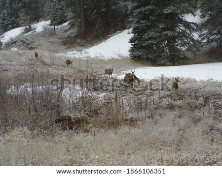 Mule Deer pictures in Bailey Colorado
