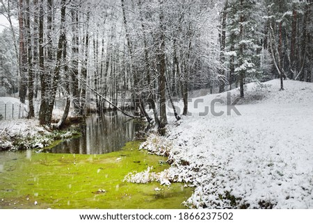 View of the frozen green swamp and forest after a blizzard. First snow. Trees in a hoarfrost. Winter wonderland. Seasons, ecology, environmental conservation, nature. Atmospheric landscape