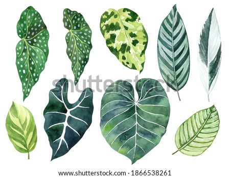 Tropical leaves watercolor hand drawn set with begonia, alocasia, calathea greenery. Clipart for wedding invitations, save the date cards, birthday cards, stickes.