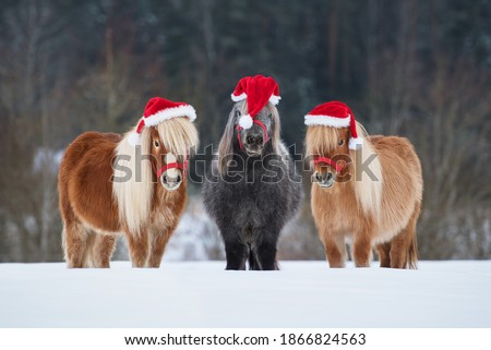 Three funny miniature shetland breed ponies dressed in Christmas Santa hats standing in a row on the snowy field in winter. Pet at Christmas. #1866824563