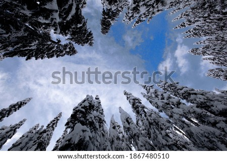 Looking up at a partly sunny sky through a circle of snow-covered evergreen trees in Snoqualmie Pass, WA  Royalty-Free Stock Photo #1867480510