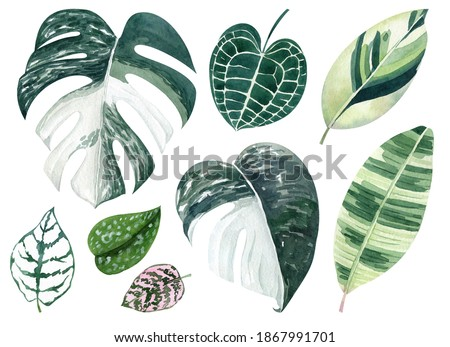 Tropical leaves watercolor hand drawn set with monstera, anthurium, fittonia greenery. Clipart for wedding invitations, save the date cards, birthday cards, stickes.