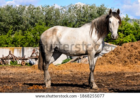 Photo picture of beautiful Horse on a farm
