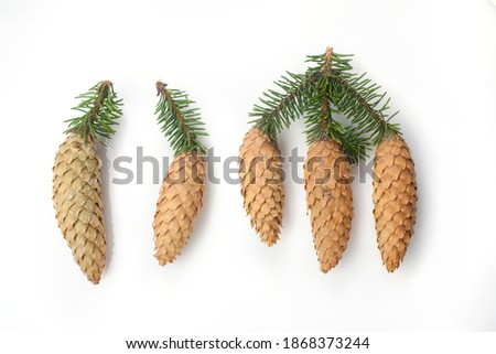 cones spruce close-up isolated on white background top view Royalty-Free Stock Photo #1868373244